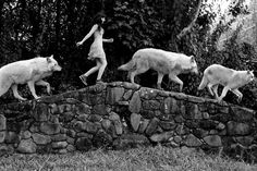 Home - Save gray wolf Wolf Spirit, Spirit Animal, Wolf Hybrid, Foto Fantasy, Wolves And Women, Fantasy Quotes, Black And White Wallpaper, Black White, Wolf Stuff