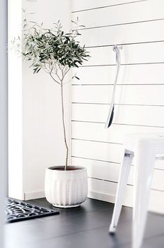 Entryway Lonely corner | Potted Olive Tree
