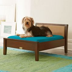 The Company Store Pet Bed. Our chic and stylish Sophie dog bed is upholstered in luxuriously soft faux suede and framed in wood with a rich cherry finish.