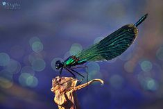Fish, Pets, Blog, Butterfly House, Macros, Photo Tips, Close Up Photography, Insects, Beautiful Things