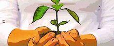 Distintas técnicas para reproducir nuestras plantas