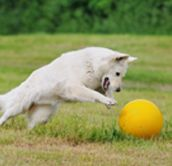 K-9 Essentials - Premier Canine is a partnership between dog agility professionals and Premier Equestrian, formed to develop superior dog agility equipment and performance arenas.  http://www.premiercanine.net/