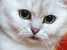 Hello cat lovers