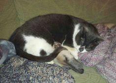 Whippet has fur blanket