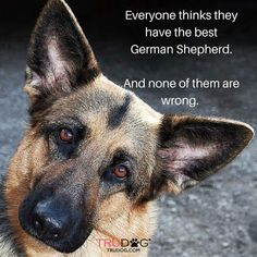 Wicked Training Your German Shepherd Dog Ideas. Mind Blowing Training Your German Shepherd Dog Ideas. German Shepherd Training, German Shepherd Puppies, German Shepherds, German Shepherd Pictures, Schaefer, German Shorthaired Pointer, Dog Rules, Working Dogs, Dog Life