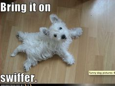 Lol so cute! That's about how my Sadie looks when she is spread out. And she likes to eat the Swiffer dusters!