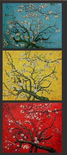 Van Gogh's Almond Blossoms.. I love this grouping. Such a perfect way to display these three versions of his blossoms! ❤️