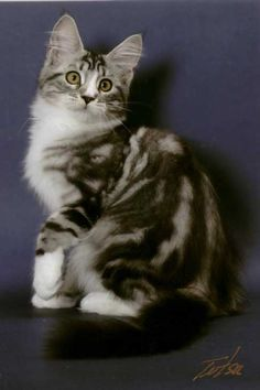 #cute #funny #pets #kitty #cats #attractive