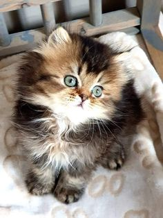 Perfect Toys for Your Cat Cute Little Kittens, Cute Baby Cats, Cute Cats And Kittens, Cute Baby Animals, Kittens Cutest, Animals And Pets, Beautiful Kittens, Pretty Cats, Animals Beautiful