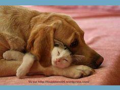 A kutya sajnálja a cicust ezért öleli öleli meg a cicát.