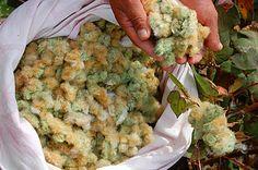 Ecobutterfly: Organic Cotton Yarn Information