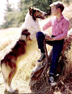 Lassie... Everyone wanted to have a Lassie!