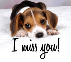 105 Best I Miss You Images I Miss U Miss You I Miss You
