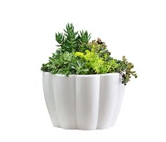 Succulent Bowls, Succulents, Outdoor Life, Western Australia, Planter Pots, Great Gifts, Park, Nature, Table