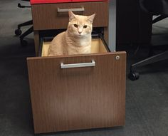 Sorry, this desk is occupied #FileUnderCute