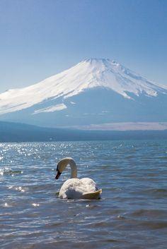 Beautiful Swan @Lorraine K #Photography