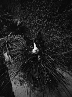 Fotografie: Coole Katzen in Schwarz-Weiß - KlonBlog