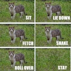 - World's largest collection of cat memes and other animals Funny Animal Memes, Funny Animal Pictures, Funny Images, Funny Cats, Funny Animals, Cute Animals, Hilarious Pictures, I Love Cats, Crazy Cats