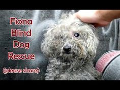 DOLLY HEROES Must-see video! The rescue of a blind dog that was left to die. Happy ending! ❤ Dolly