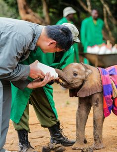 Retired basketball player Yao Ming bonds with a two-week-old orphaned African Elephant named Kinango at Daphne Sheldrick's Elephant Orphanage in Kenya.