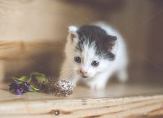 Check out A wonderful kitty by livefolk on Creative Market