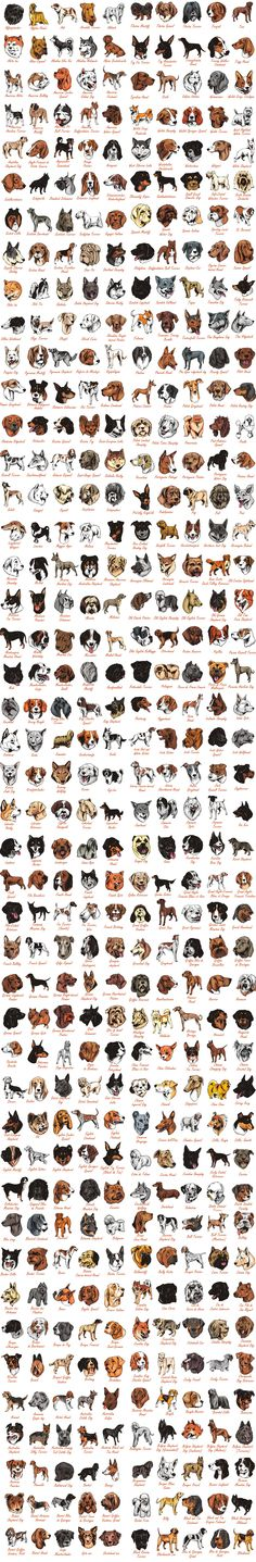 All dog breeds - Download  a set of 1350+ Dog breeds in vector format Popular Dog Breeds, Lovely Creatures, Vector Format, All Dogs, Funny, Design, Info Graphics, Hilarious, Entertaining