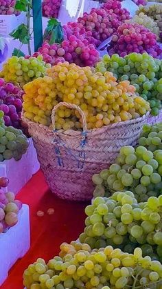 A carnival of Grapes Fruit And Veg, Fruits And Vegetables, Fresh Fruit, Fruit Photography, Beautiful Fruits, Colorful Fruit, Delicious Fruit, Fruit Art, Fruit Recipes