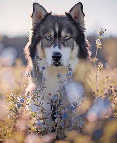 Sieh dir dieses Instagram-Foto von @hikingdogsofinsta an • Gefällt 112 Mal