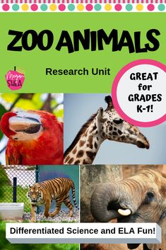 Differentiated Zoo Animal Research Unit for Kindergarten or First Grade A research unit for zoo animals. Differentiated for ELA and science! This unit is fun, engaging, and would be perfect to use before or after a class trip to the zoo, or anytime!