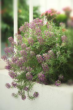 flor de mel