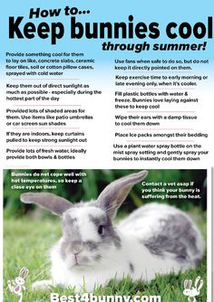 How to keep your bunny cool in this hot weather!!