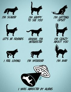Meaning of Cat Tail Movements | How to Interpret a Cat's Tail Movements