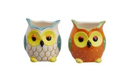 Cute owl pot plants for DIY projects or simply just for decoration