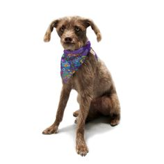 Kess InHouse Catherine Holcombe 'Inner Circle Purple' Lavender Pet Bandana and Scarf, 28 by 20 by 20-Inch * You can find more details by visiting the image link. (This is an affiliate link and I receive a commission for the sales)