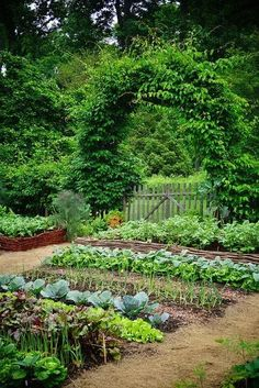 Backyard Vegetable Gardens, Potager Garden, Veg Garden, Vegetable Garden Design, Garden Cottage, Garden Edging, Edible Garden, Garden Beds, Outdoor Gardens