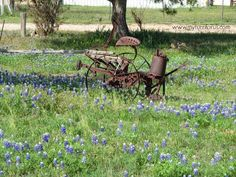 My Turn for us: Springtime in Texas means Bluebonnets