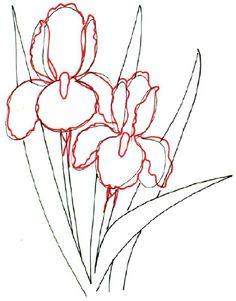 https://mynaturebook.wordpress.com/2014/02/15/how-to-draw-a-bearded-iris-line-drawing/
