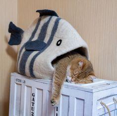 Cat Cave, B 13, Cat Crafts, Cute Animal Pictures, Cat Furniture, Cute Cats, Cute Animals, Felt, Junk Mail