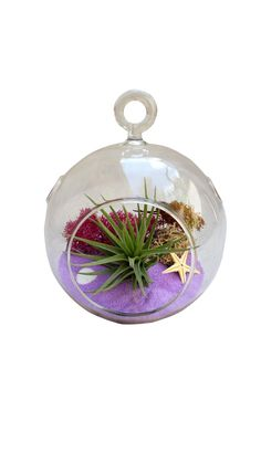 Valentine Purple Airplant Terrarium