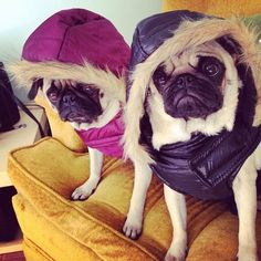 I think I know a couple Pugs who would work these parkas ;)