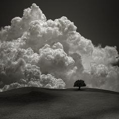 Lone Tree and Big Clouds via Searching Hearts