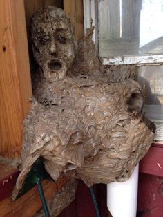 Funny pictures about Scary Hornet Nest. Oh, and cool pics about Scary Hornet Nest. Also, Scary Hornet Nest photos. Nest Building, Creepy Photos, Bizarre Photos, Creepy Images, Haunting Photos, Wooden Statues, Wasp, Hornet, Mother Nature