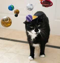CAT TORTURE!!!! Muahahahaha! Cats Are Center of the Universe/ Solar System Cat Fascinator/ Planetary Kitty Hat. $25.00, via Etsy.