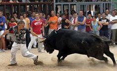 Alicante prohíbe un festejo taurino legal en el campo por celebrarse en «suelo protegido»
