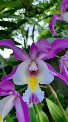 Exotic Flowers, Beautiful Flowers, Plant Trellis, Orchidaceae, Landscaping Company, Great Pictures, Houseplants, Indoor Plants, Diy And Crafts