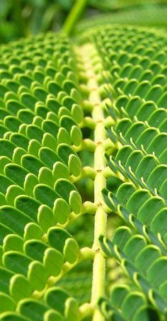 Tree frond in Brisbane, Australia // photo by Cyron @ http://www.flickr.com/photos/cyron/3977863/