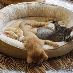 Happy World Sleep Day! (but obviously not for humans ...) #mewow #catcafe #doylestownkitties #cat #cats #catsandcoffee #mewowcatcafe #lovecats #lifewithcats #catsarethebest #cutecatpics #catpicoftheday #kitten #kittens #adoptacat #catadoption #adoptdontshop #cutecat #catsrule #catsarethebest #fortheloveofcats Instagram News, Cat Cafe, Kittens, Cats, Adoption, Sleep, Happy, Animals, Cute Kittens