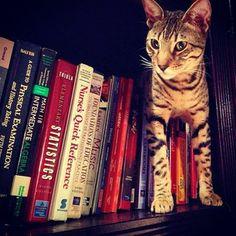 This is Bambu's new thing. Hiding in the book shelf! #Badbu