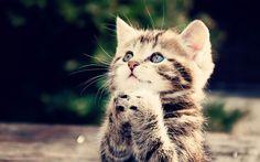 かわいい子猫-猫の写真壁紙 - 1680x1050 壁紙ダウンロード ...