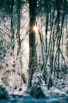 All Around the Little Christmas Tree | byLars van de Goor| Website.